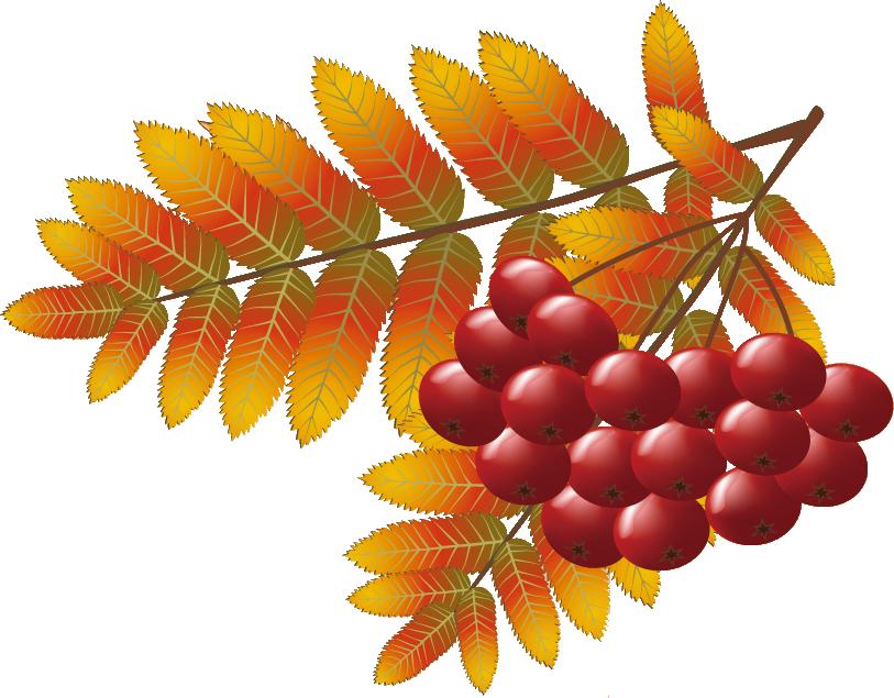 秋のイラストNo.154『木の実と紅葉』/無料のフリー素材集【花鳥風月】 Ветка Калины Png