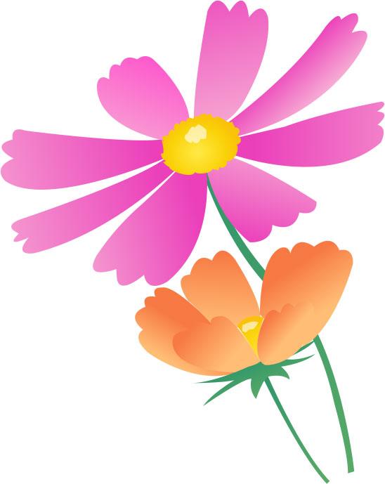 秋の画像サンプル-コスモスの花