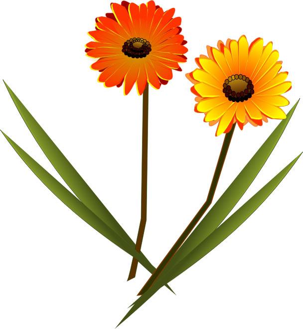 画像サンプル-10月誕生花-ガーベラ