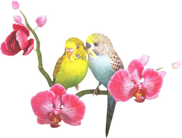 画像サンプル-インコと胡蝶蘭