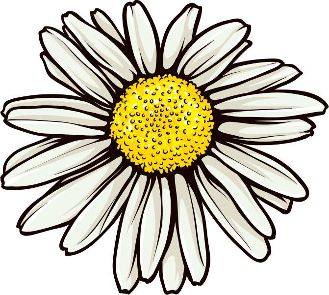 画像サンプル-2月誕生花-マーガレット