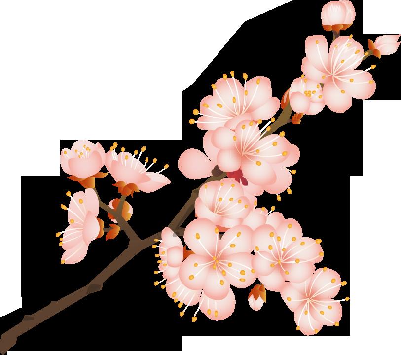 春のイラストno 022 桜の花とつぼみ 無料のフリー素材集 花鳥風月