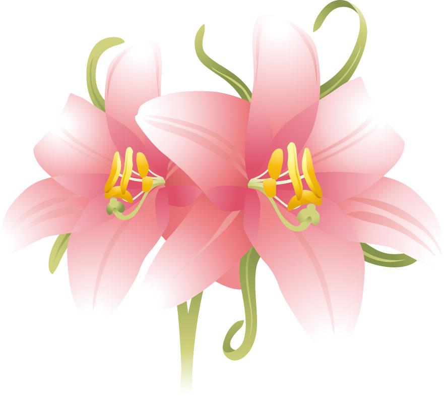 夏の画像サンプル-ユリの花・ピンク