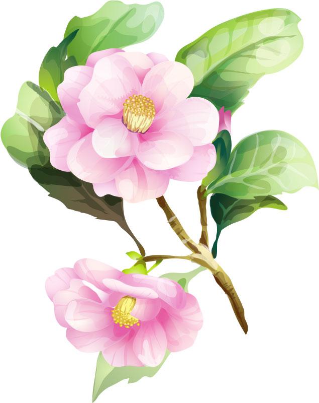 冬の画像サンプル-椿の花-リアル