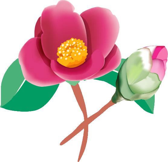 冬の画像サンプル-椿の花とツボミ